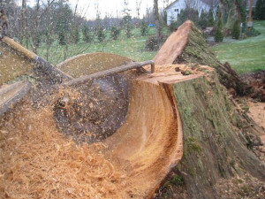 Stump Grinder In North Shore