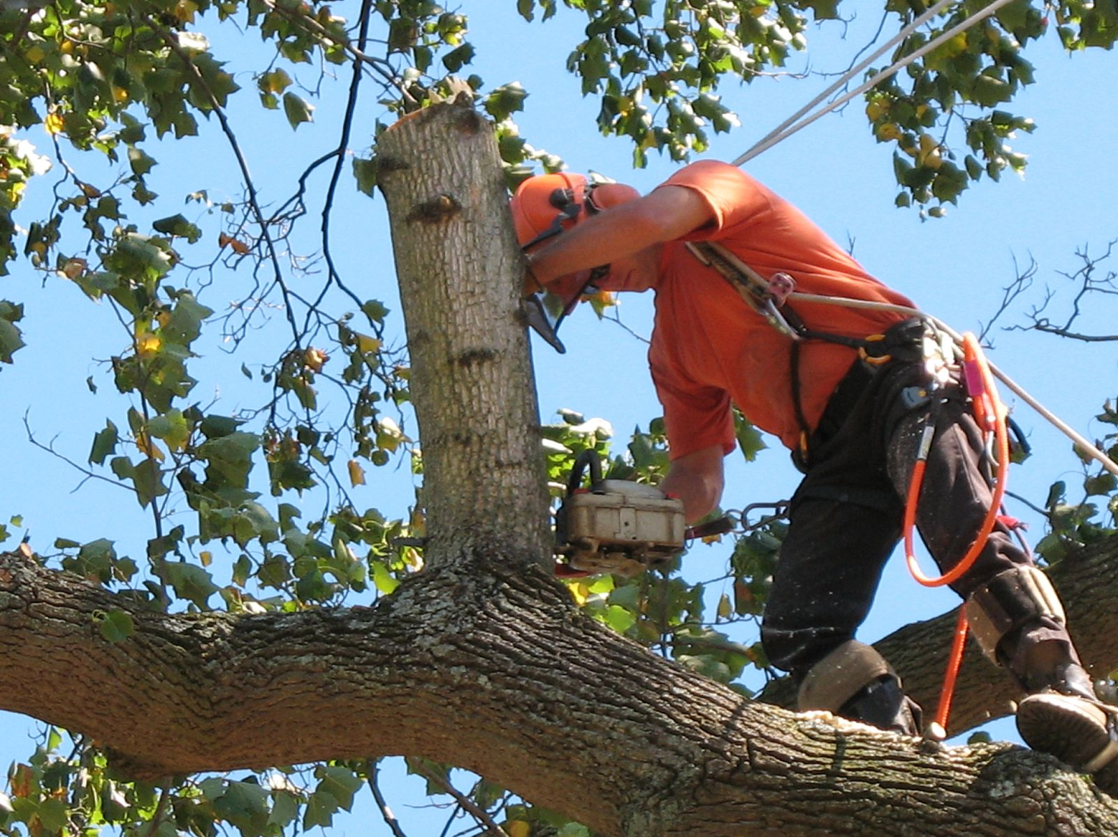 North Shore Tree Services Picture, North Shore Tree Removal Picture