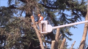 North Shore Tree Removal