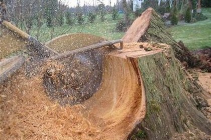 Stump Grinding Price