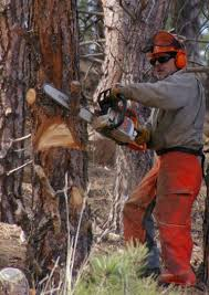 tree lopping contractors